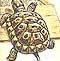 Víte, jak uložit želvu k zimnímu spánku?