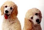 Myslíte, že se můžou zvířata léčit i homeopaticky?