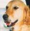 Taky  vám připadá, že se vaši psi chovají, jako by neslyšeli?