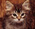 Máte doma koťátko? Víte, jak ho krmit?