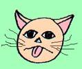Může dostat kočka salmonelózu?