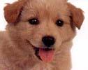 Na co si dát pozor, když kupujete štěně?  Jak poznat špatného chovatele?
