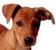 Jak se se psím mateřstvím? Kdy může být fenka březí?