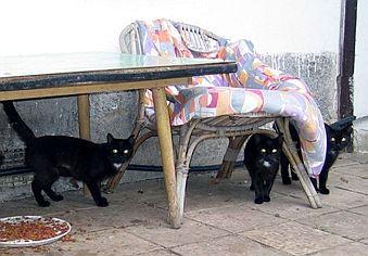 Mlácení černá kočička