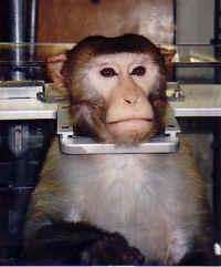 Opice v laboratoři