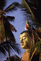 Socha Buddhy v klášteře Wewurukannala, v Dikwelle