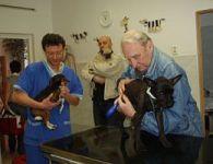 Ve veterinární ordinaci se dveře netrhnou