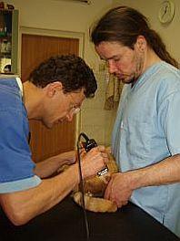 Před operací musí být Peťuna oholen