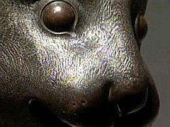 Detail hlavy zajíce