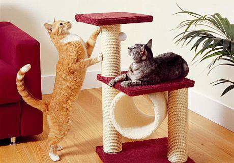 Kočičí dovádění