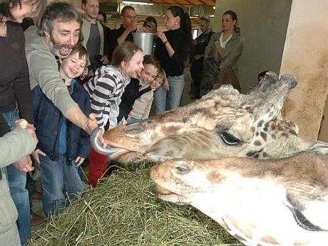 Žirafa Petra Vacka