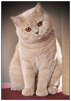 Mastná velká kočička