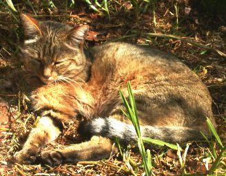 Moje africká kočička