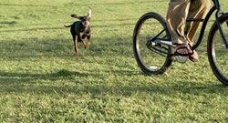 pes a kolo