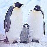 Tučňáci s potomkem