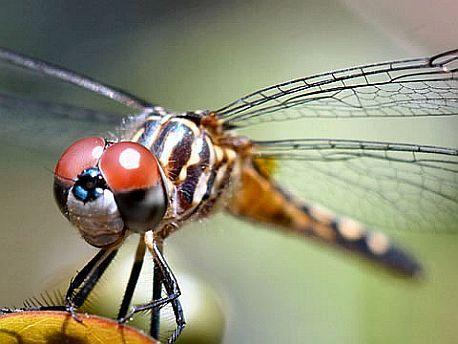 Také vážky mají u nás svůj osud zpečetšný