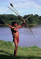Jihoamerickým indiánům pomáhá guarana v těžkých podmínkách přežít