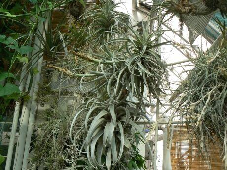 Brno botanická