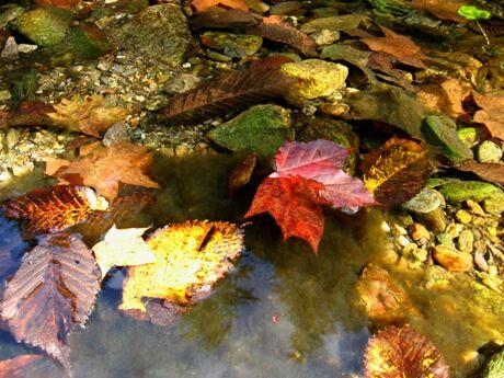 podzimni barvicky