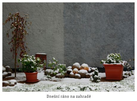 zahrada