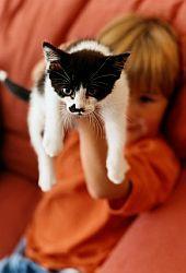 Od kočky se lze nakazit
