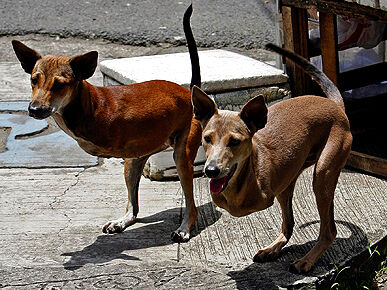 klokaní psi