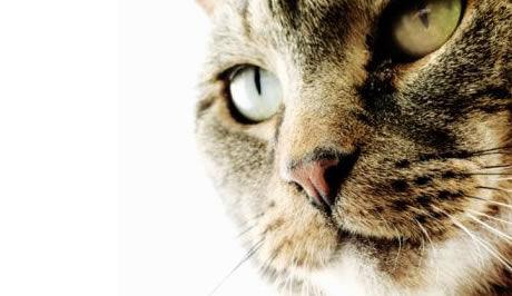 Velký, ale kočička