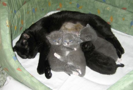 koťata a Fausta