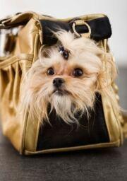 Kabelka s psíkem - ilustrační foto