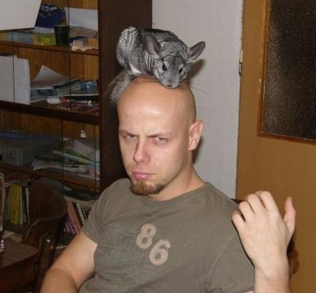 králík na hlavě