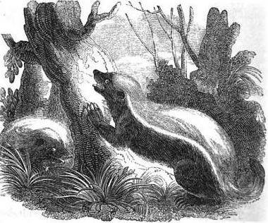 kreslený fox sex vintage eben sex videa