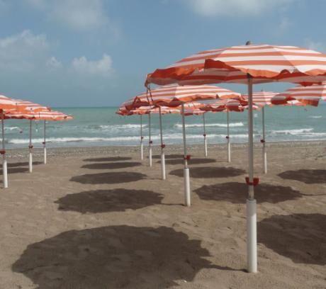slunecniky u more