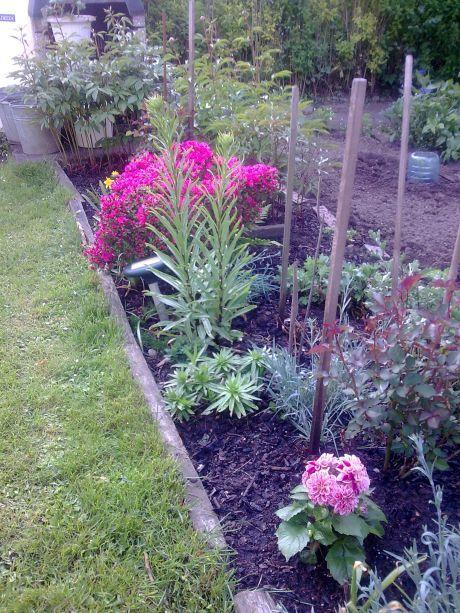 kvetouci zahrada
