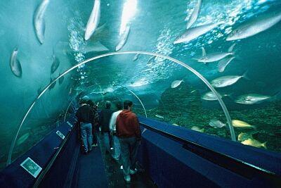 podmorskysvet
