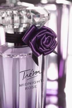 Midnight Rose.