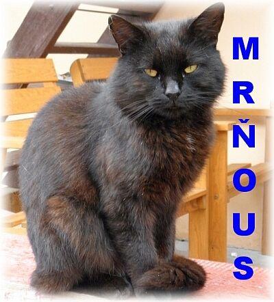 mrnous