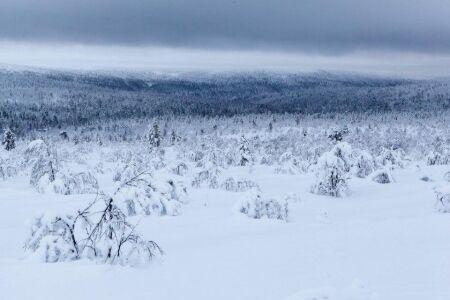 N�rodn� park Finska Lemmenjoki