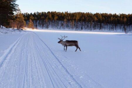 N�rodn� park Finska Lemmenjoki - sob