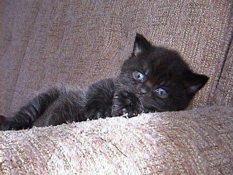 černá kočička v posteli horké asijské dává kouření