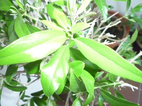 rostlina1