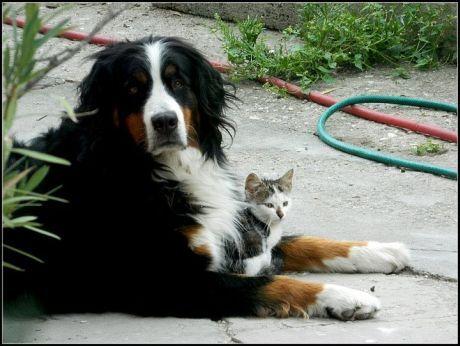 kocka a pes, pes a kocka