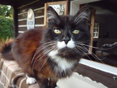 A někdy babička mívala ještě jednu kočičku, černobílou, a to byla Mína.