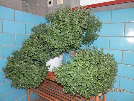 chrisant�ma