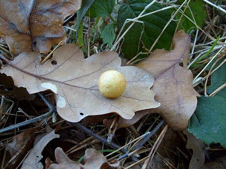 podzim.....