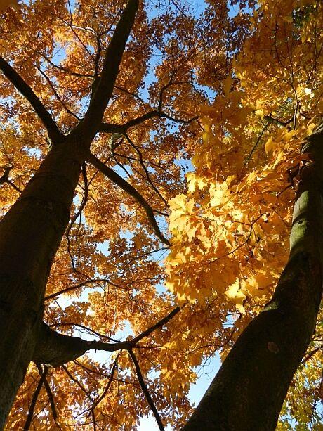 stromy....