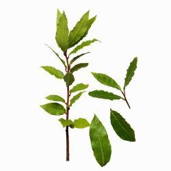 bobkov� list