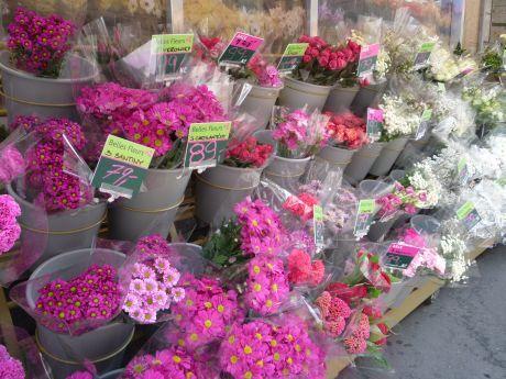 květiny u vchodu