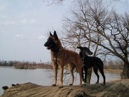 Zarja a Číra