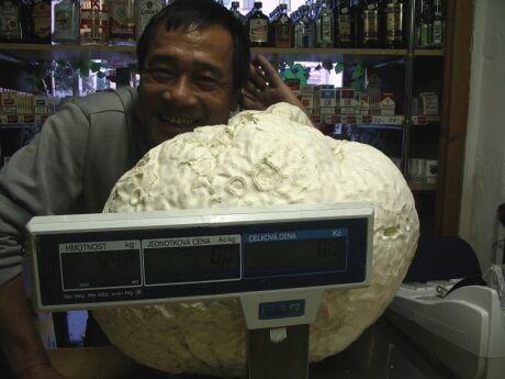 pýchavka 5,4 kg
