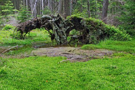 Pavlova huť v Českém lese